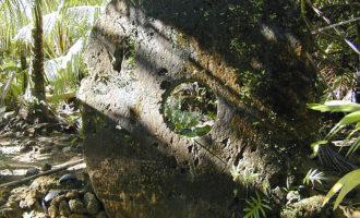 Rai-stein i jungelen på Yap