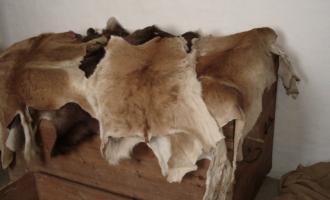 buck - eller hjorteskinn, ble brukt om dollar. Les om nickel, dollar, dime og mye annet her!